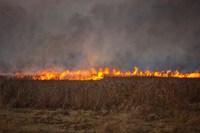 За пять дней праздников пожарные выезжали на палы травы 28 раз